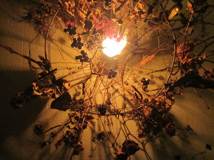Beauty In Nature Branch Cafe Close-up Cold Temperature Day Dryed Flower Interior Design Leaf Light Light Bulb Nature No People Shadow Silhouette Sunbeam Tree Winter