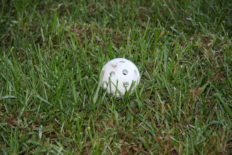 Grass Green Color Plant Land White Color No People Ball Field High Angle View Nature Day Sport Golf Single Object Growth Close-up Outdoors Golf Ball White Activity Wiffleball Baseball