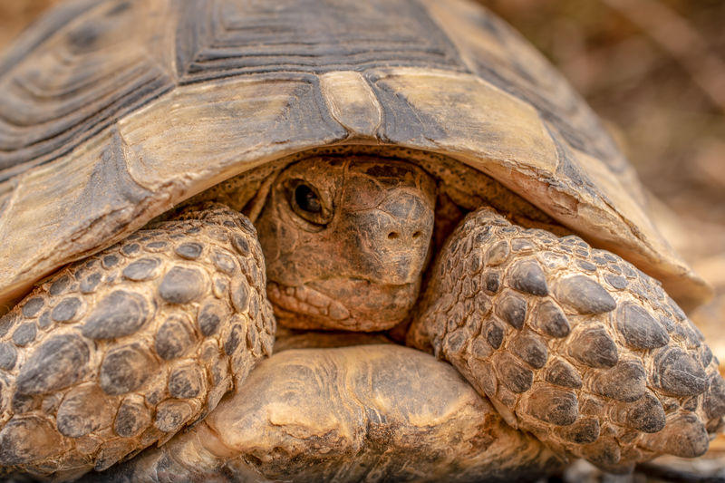 Turtle close-up, looking into camera. EyeEmNewHere Animal Animal Body Part Animal Head  Animal Scale Animal Shell Animal Themes Animal Wildlife Animals In The Wild Close-up Day Focus On Foreground Nature No People One Animal Portrait Reptile Shell Tortoise Tortoise Shell Turtle Vertebrate