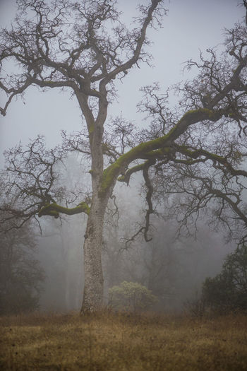 Trees on field in foggy weather
