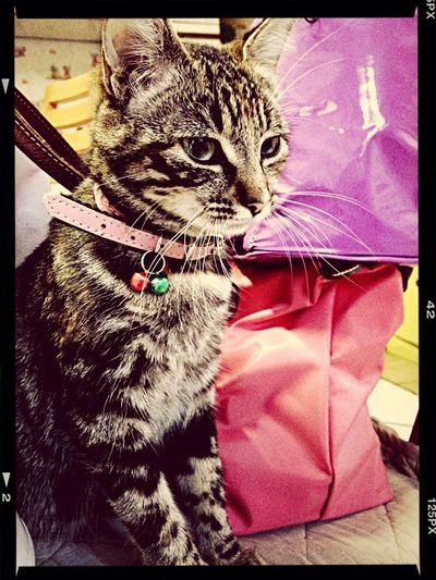 Cat Minnie  Ilovemycat Trop Mignone