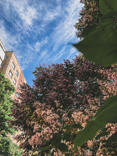 Low angle view of flowering plants and buildings against sky