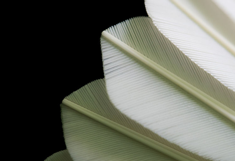 Close-up of open book against black background