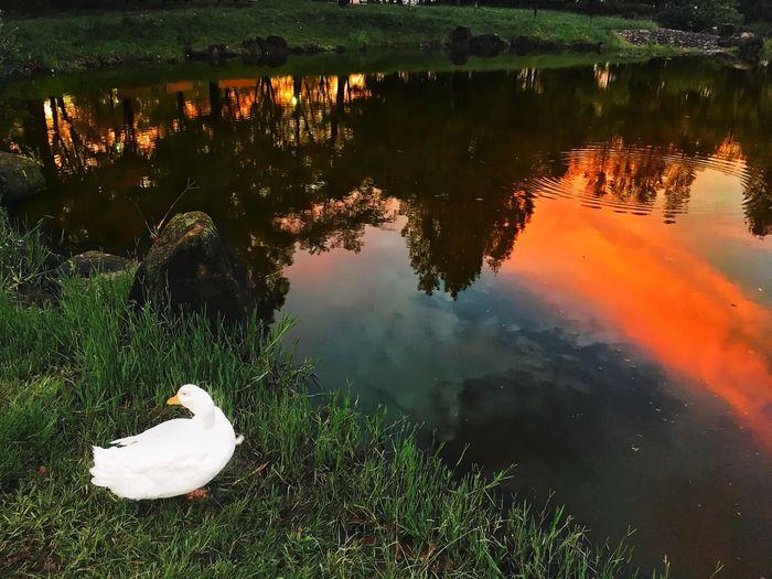 Bird swimming in lake