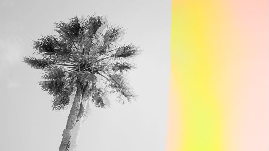 Vintage Beach Tropical Paradise Abstract Background Banner Blue Bright Coconut Colorful Concept Copy Space Digital Signal Effect Exotic Funky Futuristic Glitch Glitched Hipster Isolated Minimalism Modern Nature Neon Nobody Outdoor Palm Pattern Pink Reflection Reflex Sky Vintage Style Summer Surreal Surrealism Template Texture Tourism Travel Tree Trendy Vacation Vivid Palm Tree Tropical Climate No People Low Angle View