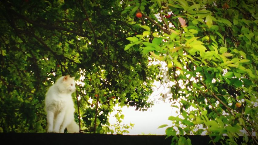 My cat, Loves getting between the trees, EyeEm Lovemycat♥ Cat Lovers Crazycat