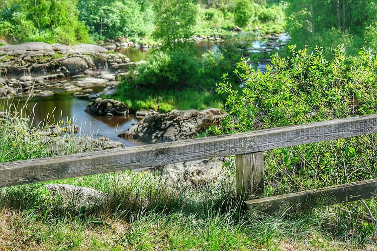 Fence Wooden Fence Fresh And Beautiful Early Summer Finland Finland Summer Summer2016 Nature Photography Water - Collection Nature_collection EyeEm Nature Lover Finland's Clean Nature Lieto Nautelankoski Green Nature