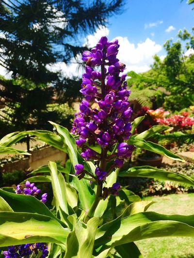 Flower Flower Nature Violet