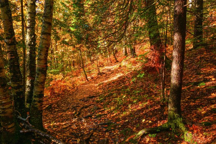 Tree Forest Plant Land Autumn Tree Trunk Trunk WoodLand Nature Beauty In Nature Tranquility Change Tranquil Scene Growth Scenics - Nature No People Non-urban Scene Day Environment Idyllic Outdoors Autumn Collection Trail