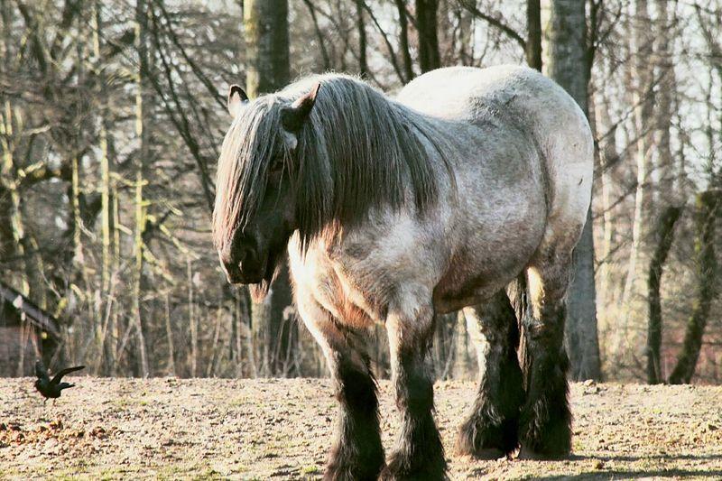 Dwarf pony at forest