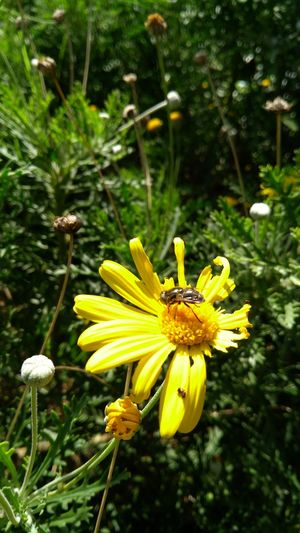 Flower Head Flower Yellow Petal Insect Stamen Pollen Close-up Animal Themes Plant
