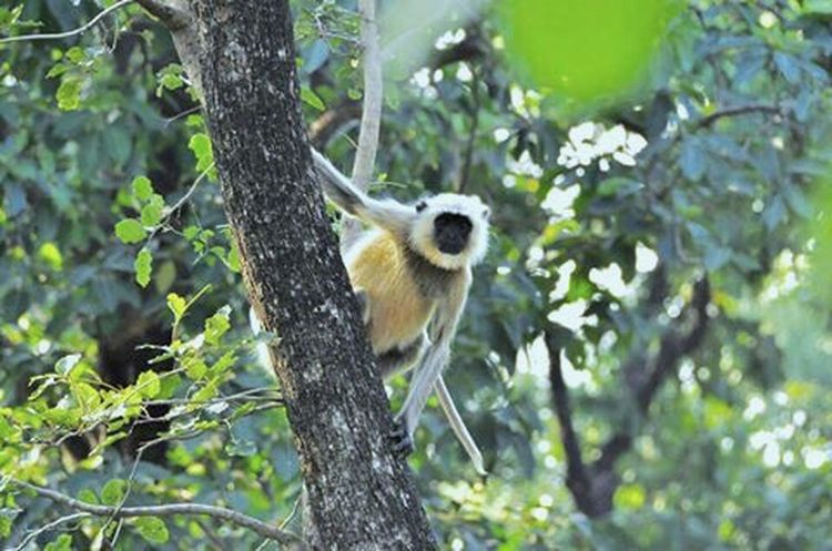 Bandhavgarh Bandhavgarh National Park India Indian EyeEm Selects Outdoors Jungle Travel Destinations The Week On EyeEm