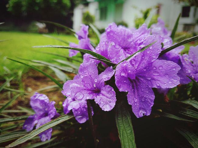 Flower First Eyeem Photo Colour Of Life