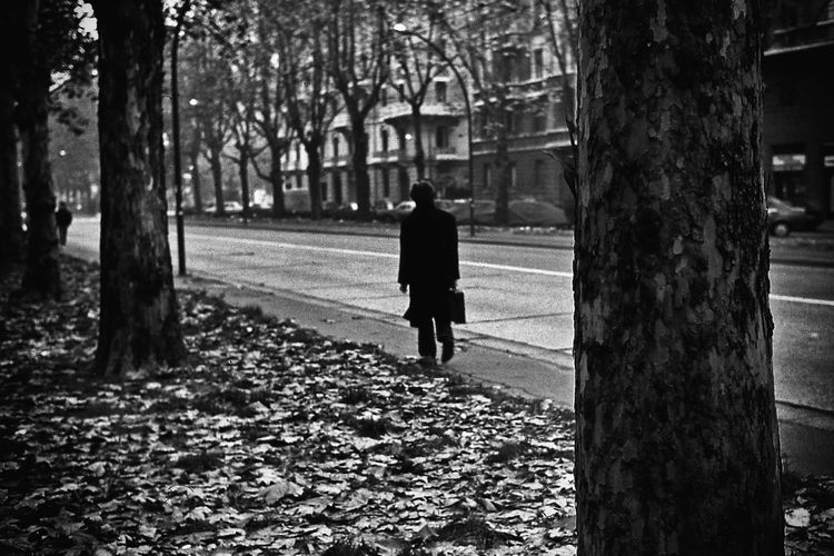 Rear view full length of man walking by fallen leaves on road in city