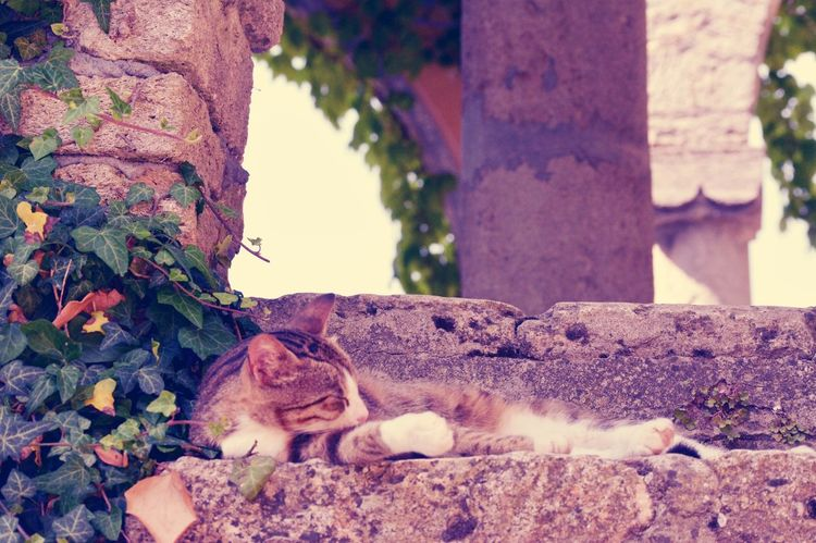 Purple Dream of a Sleeping Cat laying on Stone Stairs. Rest Relaxation Adorable Furry Feline Rural
