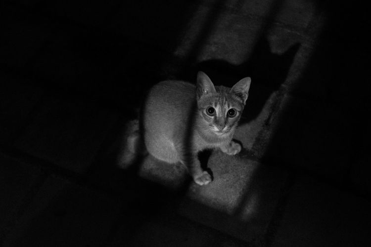 095: Neko Horror Spooky Futuristic Mammal Tabby Cat Indoors  EyeEm EyeEm Indonesia Cat Cats 🐱 Cat Watching