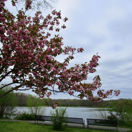 Beauty In Nature Tranquil Scene Lake Grass flowering tree sky Outdoors No People Benches