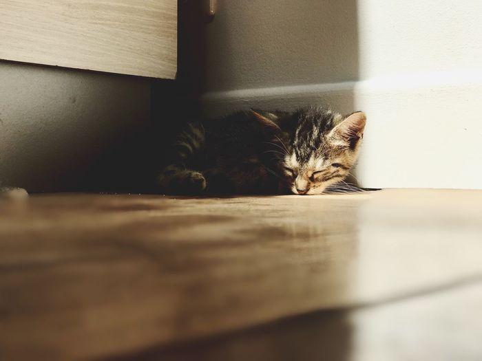 Close-up portrait of kitten lying on floor