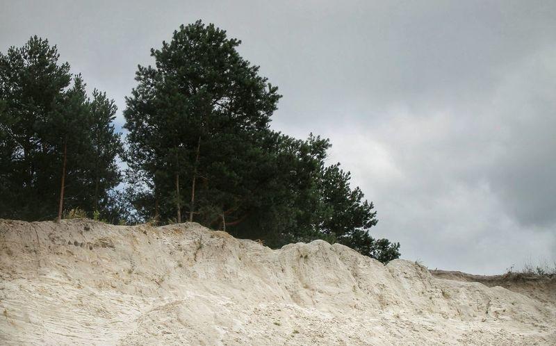 Landscape Ukraine Nature Trees Sand Photo Canon