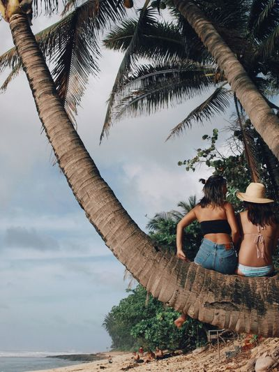 Tree Real People Palm Tree Leisure Activity Sky Women Beach Sand Nature Vacations Young Women Lifestyles Alohastate Hawaii Oahu Surfgirl Olympus Olympusphotography Beauty In Nature Aloha Nature EyeEm Best Shots Bestfriend Monkey Monkeys EyeEmNewHere EyeEmNewHere EyeEmNewHere