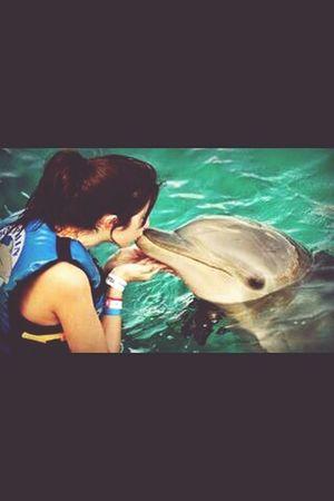 Baby dolphin. Magic day Cancun Magic February2015 Sweety  Great