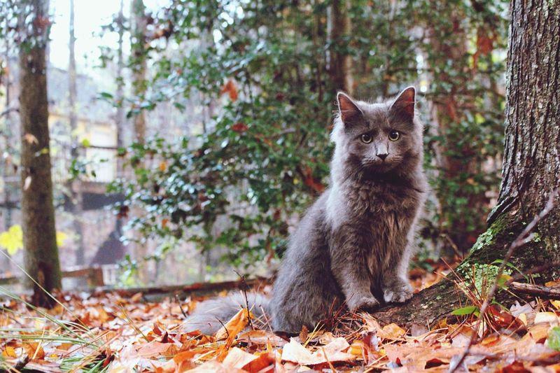 Portrait of cat against trees during autumn