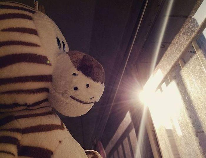 Ensaio com o tigre no varal! Rsrsrs Kim  Mobgraphia Lumia730 Tigre Tiger Brinquedo Juguete Toy