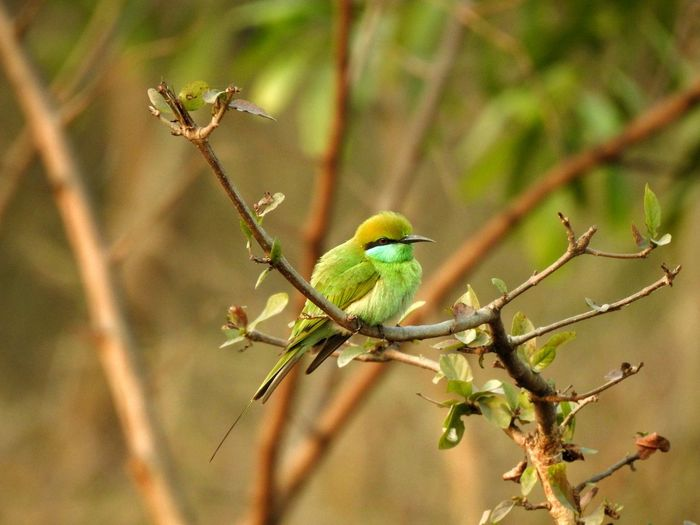 Bird Animal Wildlife Animal Branch Nature Perching Beauty In Nature Animals In The Wild Tree Wilderness Living Organism Outdoors