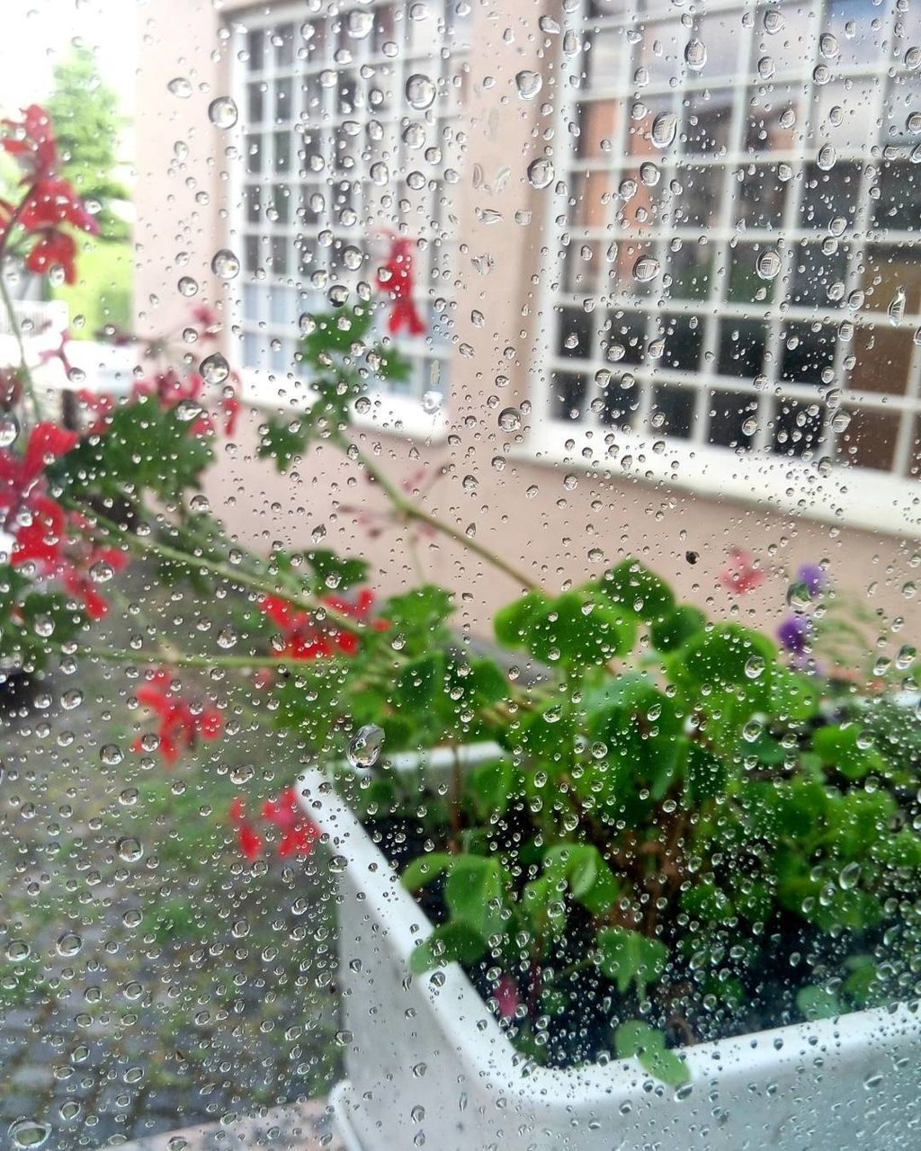window, rain, wet, weather, drop, raindrop, street, water, building exterior, car, day, architecture, no people, looking through window, built structure, city, growth, land vehicle, outdoors, road, nature, tree, freshness, close-up