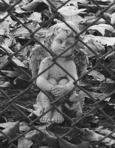 Angel Animal