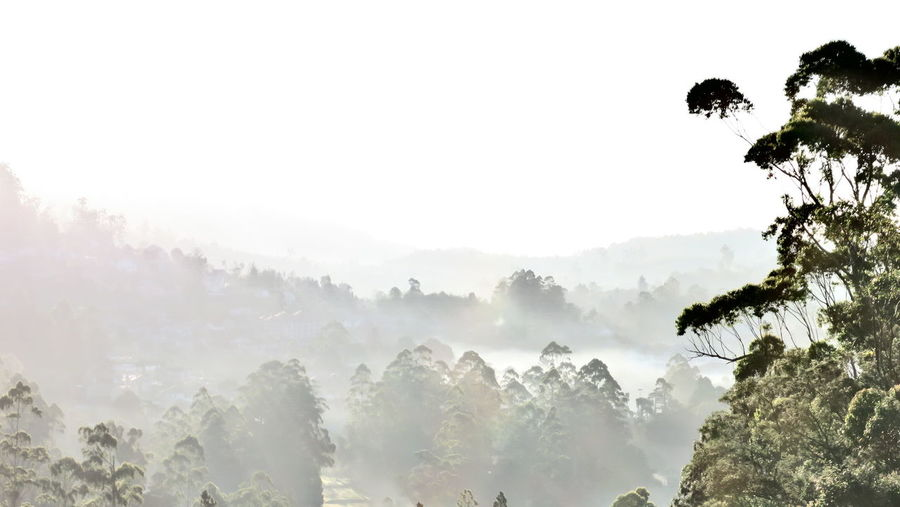Panoramic view of fog and trees against sky
