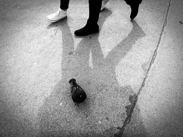 Black & white 😊 the moment 😊 Human Leg Human Body Part Real People Pigeon Bird I Go My Way City Life Black & White Black And White This Way The World Connection Shadowplay Street Street Art We Are The World The Moment Real Life True Live Cool Pic