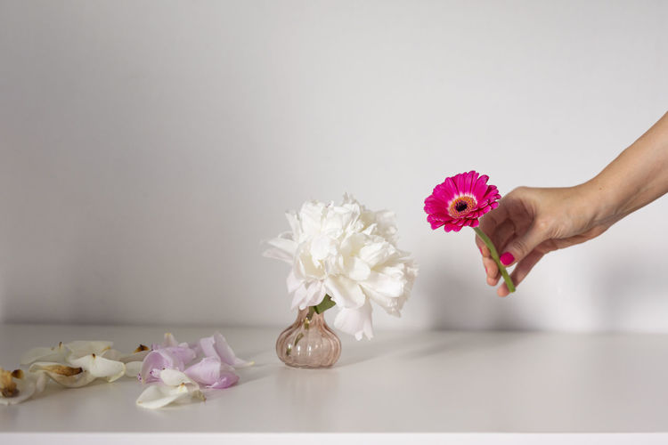 Midsection of woman holding pink flower against white background