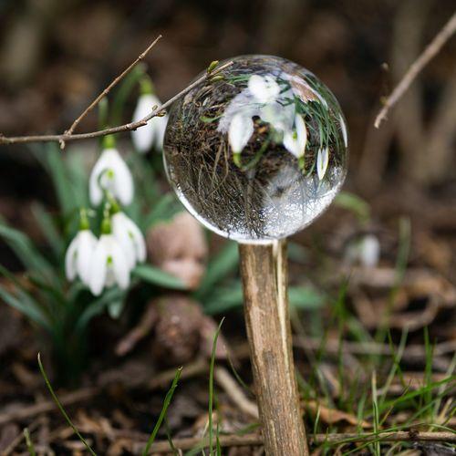 Tree Bubble