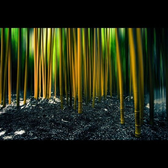 Bambou Bambouseraie_de_Prafrance France Anduze