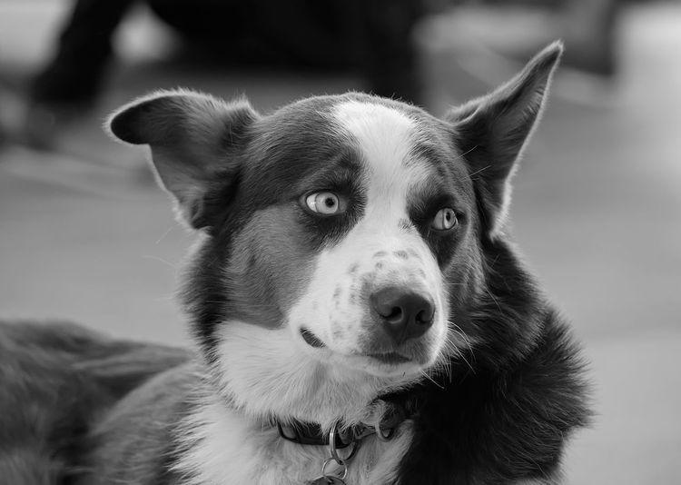 #animals #blackandwhite #dog Animal Themes Dog Domestic Animals One Animal Pets