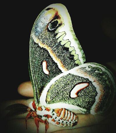 Close-up Butterfly ❤ Louisiana Eye Of Ky Beautiful Nature