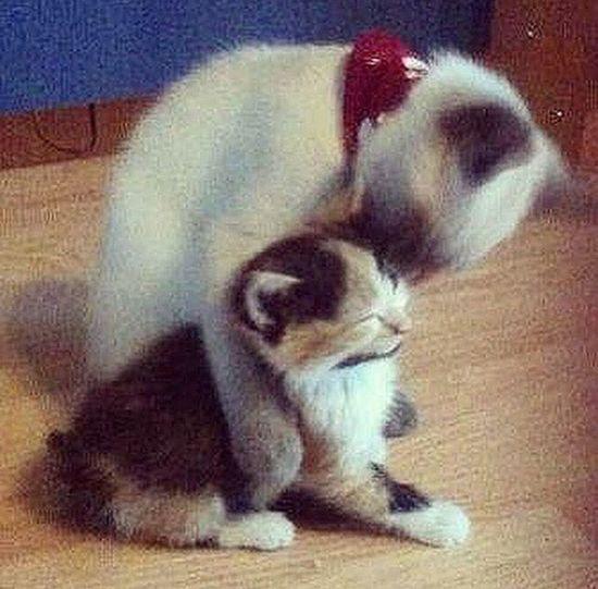Cat Kitty Kitty Cat Love Friends My Cat Love ♥ Lovely Cats Kittys  my Little love ❤️