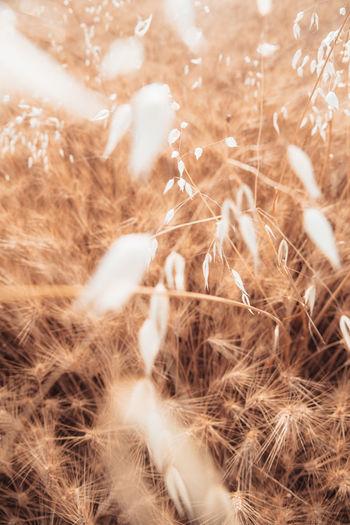 Full frame shot of dry plants on field