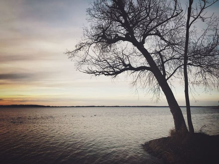 Beauty In Nature Tree Beach Nature No People Outdoors Sunset Cloud - Sky Sea Water Relaxing EyeEm Nature Lover Tranquil Scene Tranquility Lake Chillout Landscape