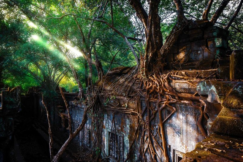 Beng Mealea, Cambodia Tropical Rainforest Historic Site Of Cambodia Temple Art Asian Temple Beng Mealea Cambodia Angkor Tree Plant No People Nature Growth Forest Day Green Color Outdoors