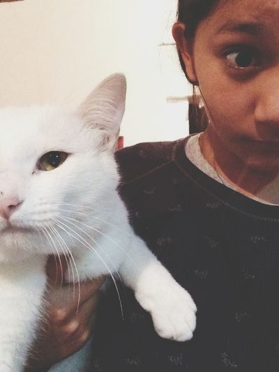 My Cat Yoruko