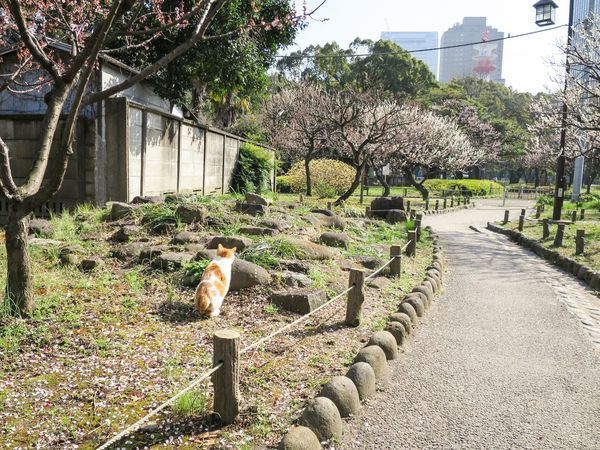 Laneway Stray Cat Cat Cat Lovers Cat Watching Animals at Minatoku 芝公園 in Tokyo Japan