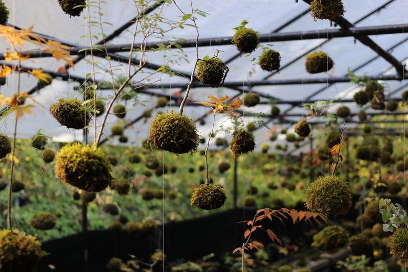 moss world Moss