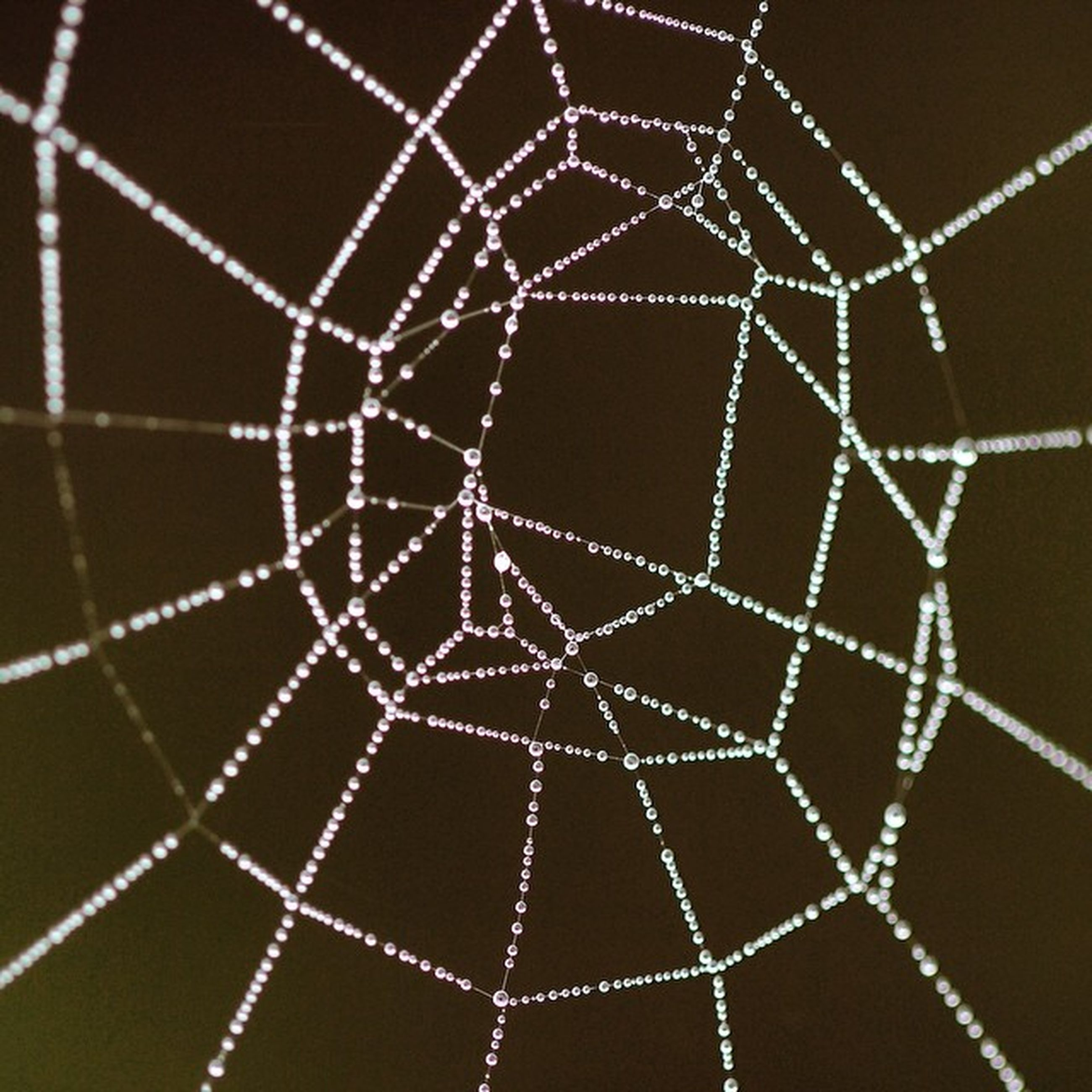 spider web, spider, natural pattern, fragility, close-up, focus on foreground, drop, nature, pattern, animal themes, complexity, beauty in nature, no people, water, outdoors, wet, web, day, dew, intricacy