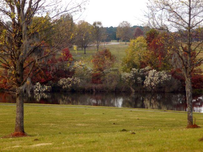 Tree Flower Branch Autumn Water Park - Man Made Space Springtime Leaf Sky Grass