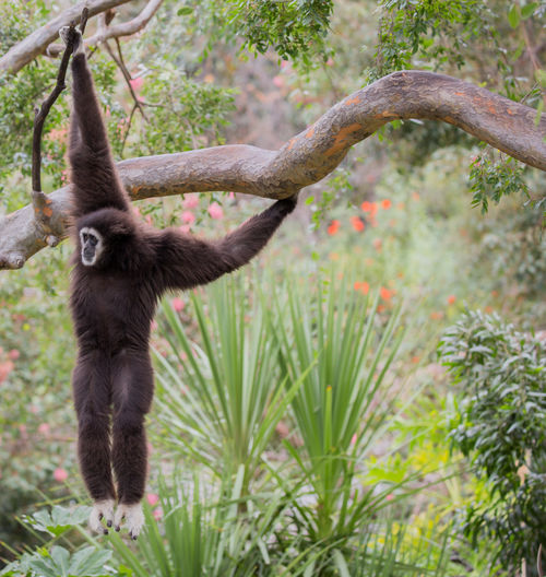 Monkey hanging on tree in forest