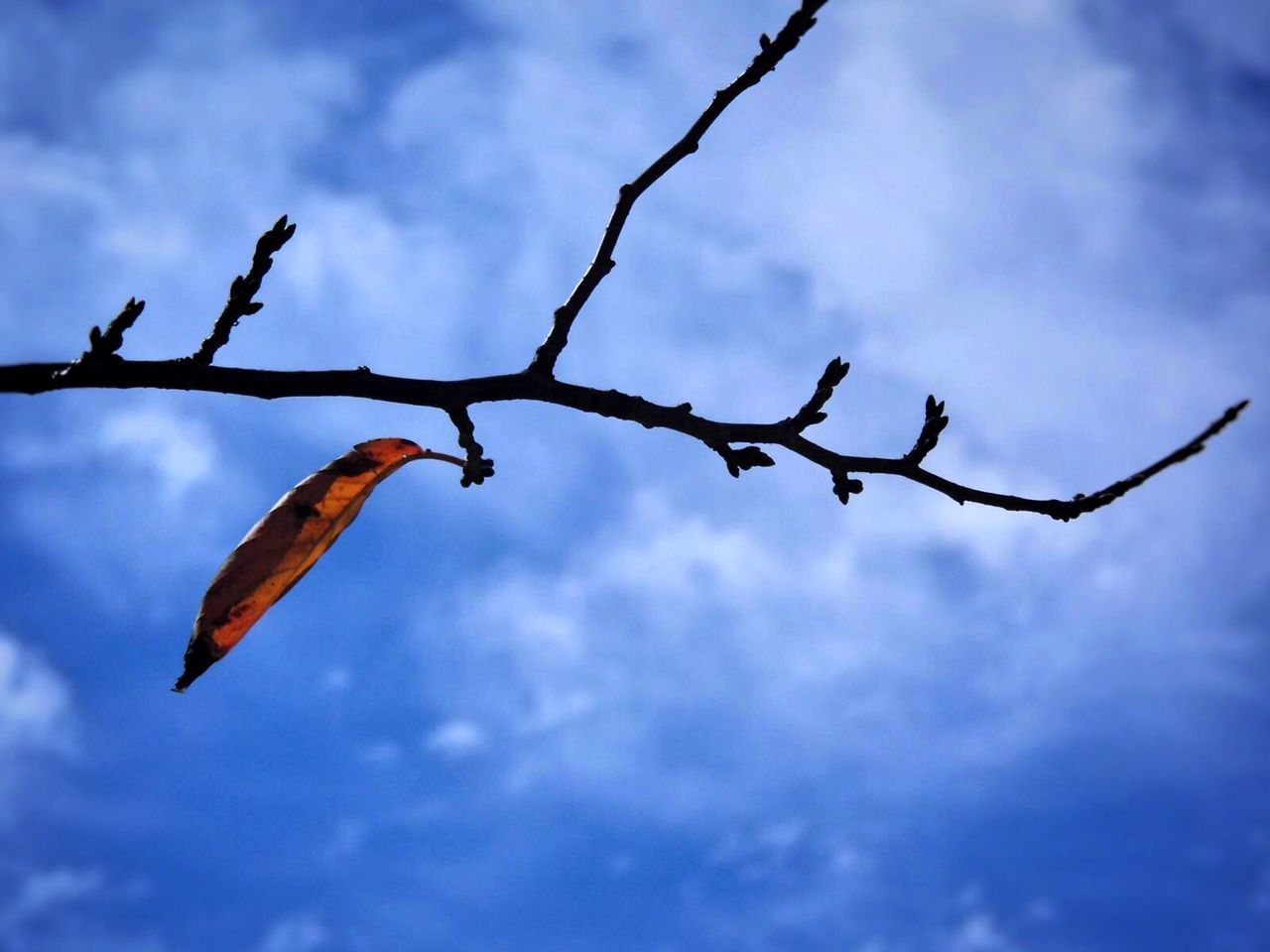 sky, nature, outdoors, no people, day, cloud - sky, low angle view, beauty in nature, growth, close-up