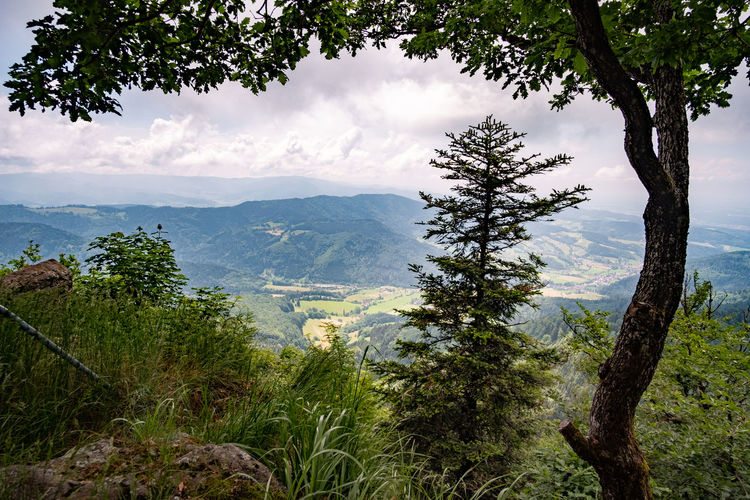 Ein Blick vom Kandel durch die Bäume Beauty In Nature Cloud - Sky Environment Green Color Growth Idyllic Land Landscape Mountain Nature No People Non-urban Scene Outdoors Plant Range Scenics - Nature Sky Tranquil Scene Tranquility Tree Tree Trunk Trunk