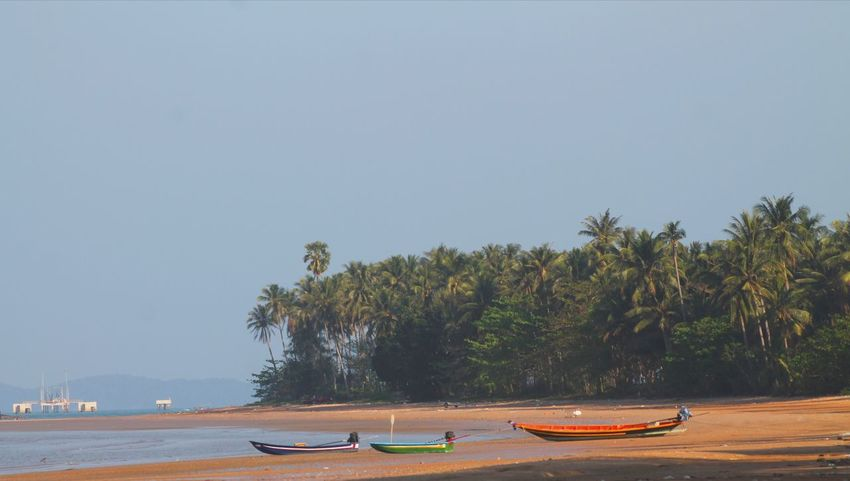 Tree Water Beach Sea Outdoor Pursuit Tourism Travel